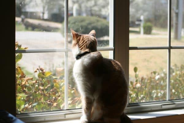 Как отучить кошку от улицы читайте статью