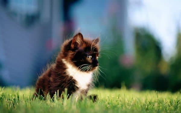 Как приучить кошку ходить в туалет на улице