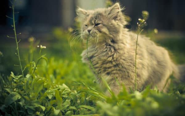 Как приучить кошку или кота ходить в туалет на улице читайте статью