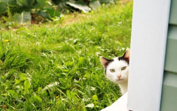 Как приучить кошку или кота ходить в туалет на улице