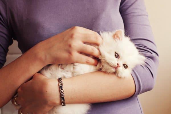 Как приучить кошку к рукам читайте статью