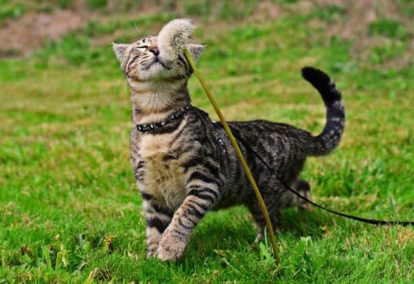 Как приучить кота или кошку ходить в туалет на улице