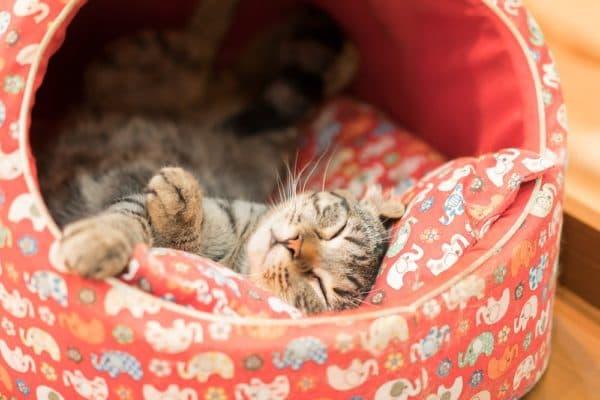 Как приучить кота к лежанке