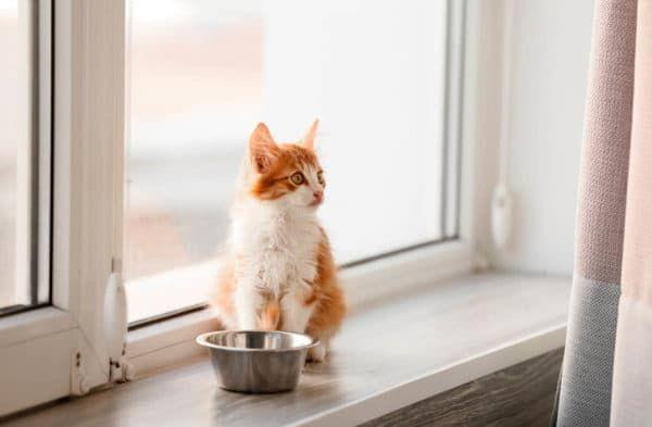 Как приучить котенка к сухому корму читайте статью
