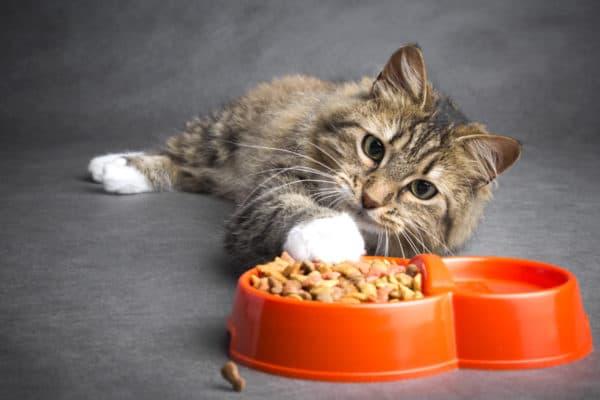 Как приучить взрослую кошку к сухому корму. Эффективный метод