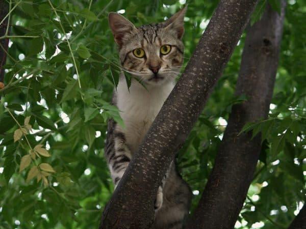 Как снять кошку с дерева читайте статью