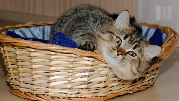 Котик в корзинке лежанке