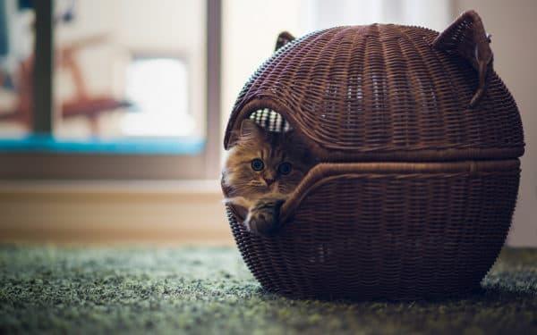 Лежак для кошки корзинка