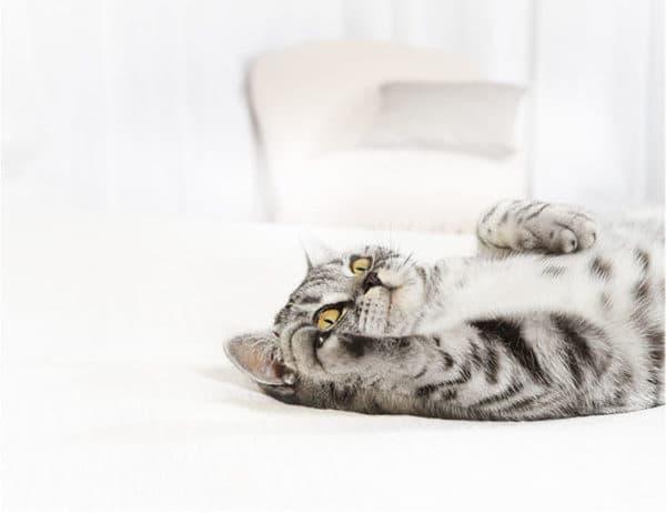 Медикаментозная терапия от глистов у кошек