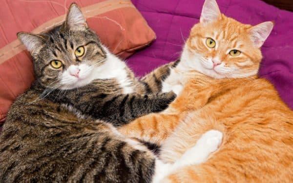 Меры по разрешению конфликта у кошек