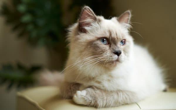 Отучение кота орать