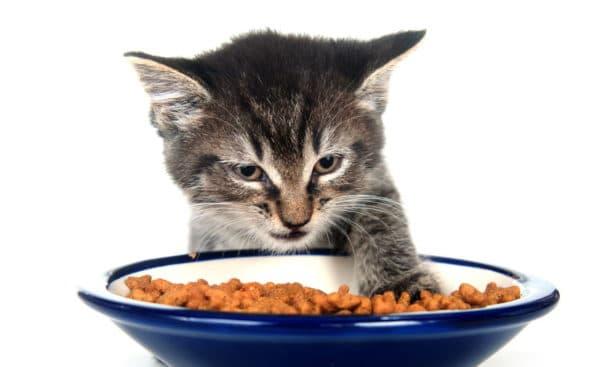 Почему котенок не ест сухой корм