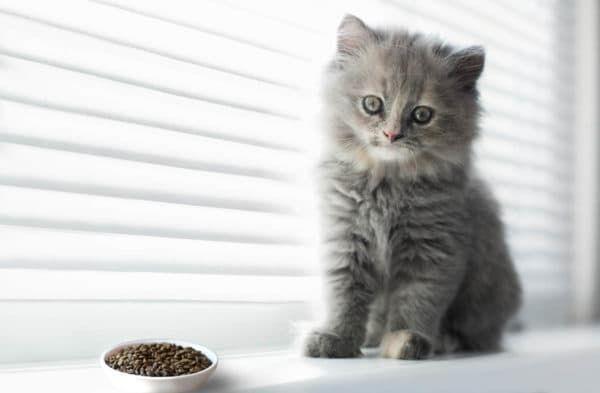 Причины по которым котенок не ест сухой корм