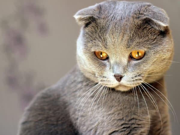 Профилактика от глистов у кошек