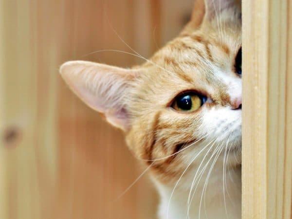 Способы отучения кошки от улицы
