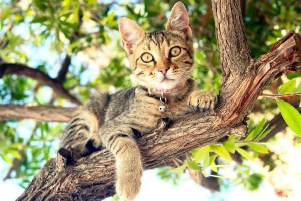 Способы снятия животного с дерева