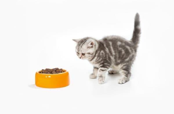 Топ-10 лучших сухих кормов для кошек