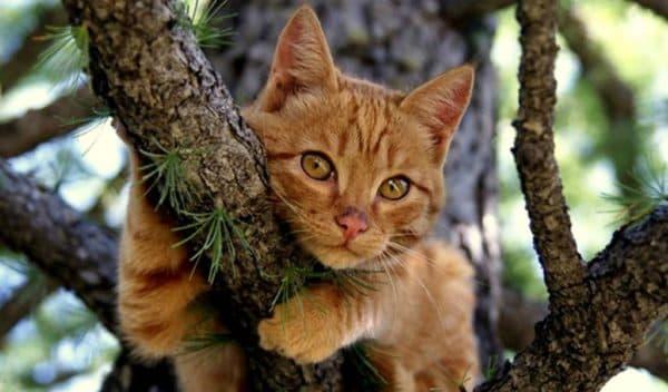 Узнайте больше о том как снять кошку с дерева