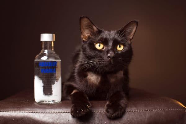 Водка от глистов у кошек читайте статью