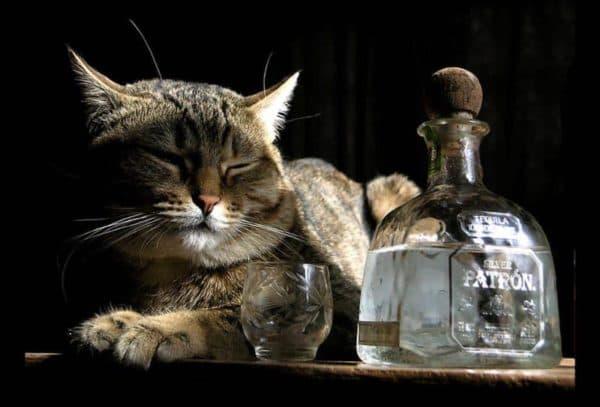 Водка от глистов у кошек
