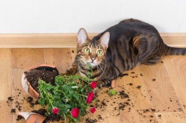 Чем опасно поедание земли для кошки