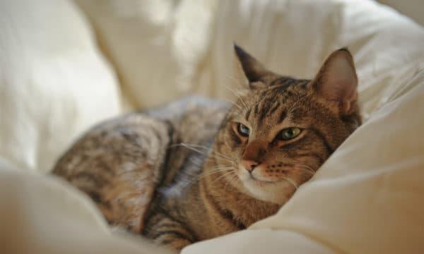 Чистоплотность кошек