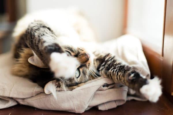 Что делать если кошка ездит на попе