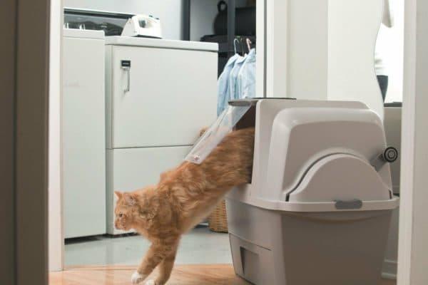 Форма лотка для кошек