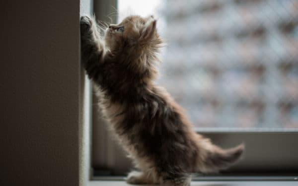 Как откорректировать поведение кошки, прыгающей на стены