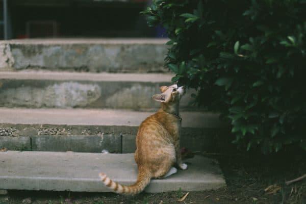 Как отучить кошек гадить в подъезде читайте статью