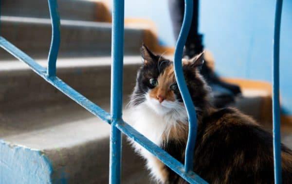 Как отучить кошку от неприятной привычки