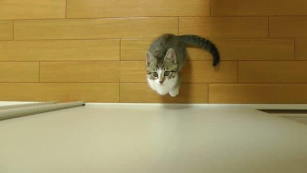 Как отучить кошку прыгать на стены