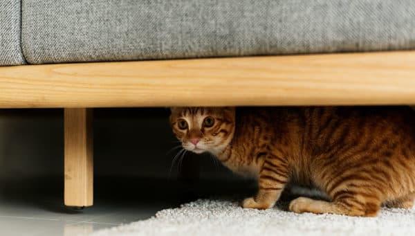 Кошка прячется в темные места. Причины читайте статью