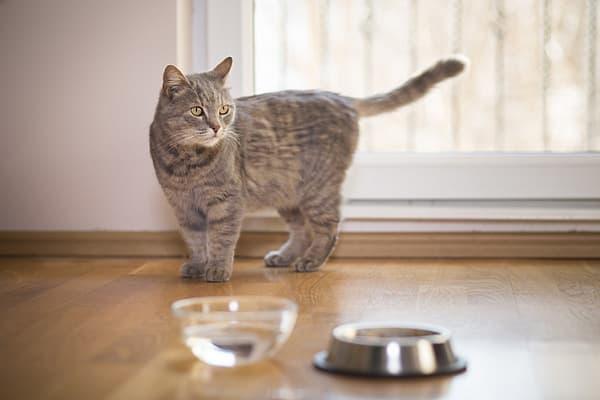 Кошка закапывает остатки еды