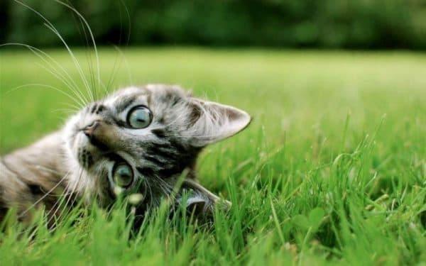 Кот ест землю