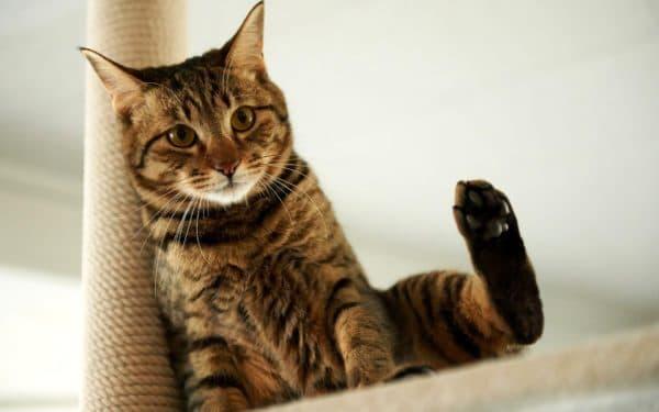 Малая подвижность кошек