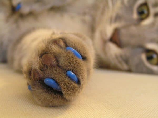 Манипуляции с когтями у котиков