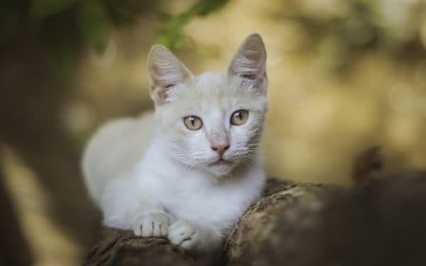 Механизмы терморегуляции у кошек