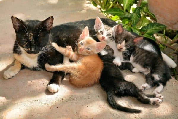 Методики для отучивания котят от сосания