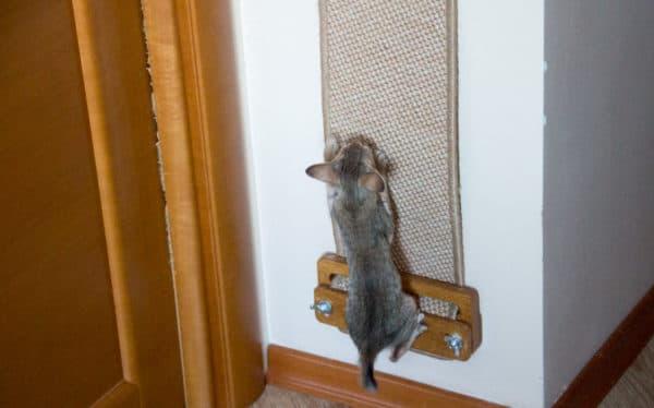 Отучение кошки прыгать на стены
