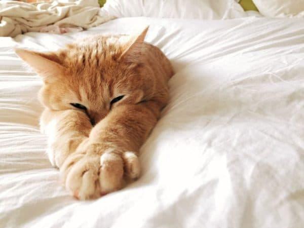 Почему кошка писает на кровать читайте статью