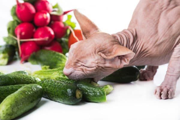 Почему кошки едят огурцы