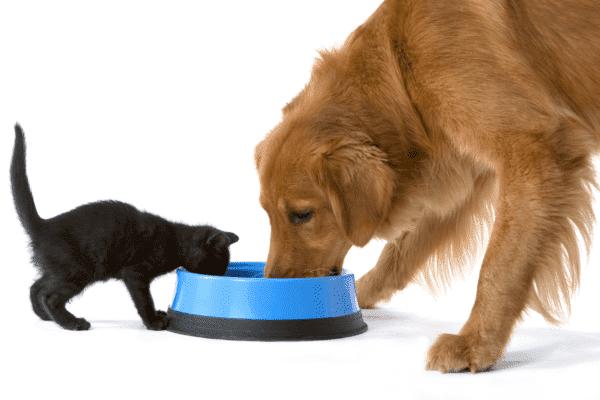 Последствия употребления кошкой собачьего корма