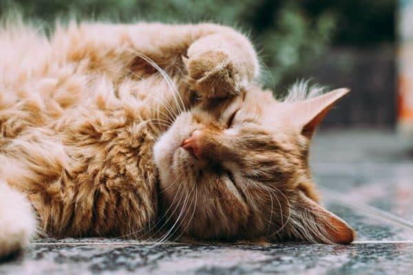 Потеют ли кошки