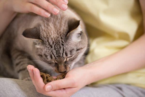 Правила кормления кошки с руки