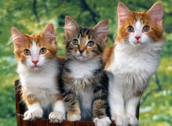 Правильное воспитание кошки
