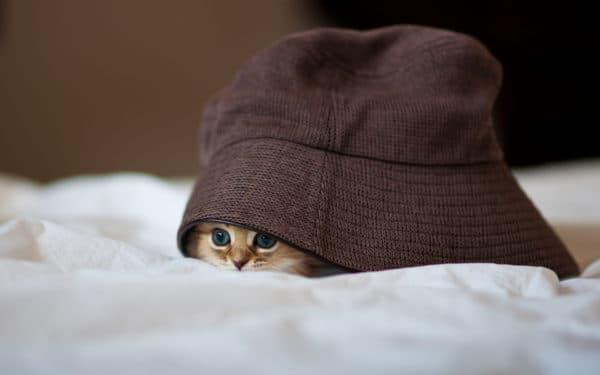 Причины почему кошка прячется в темные места