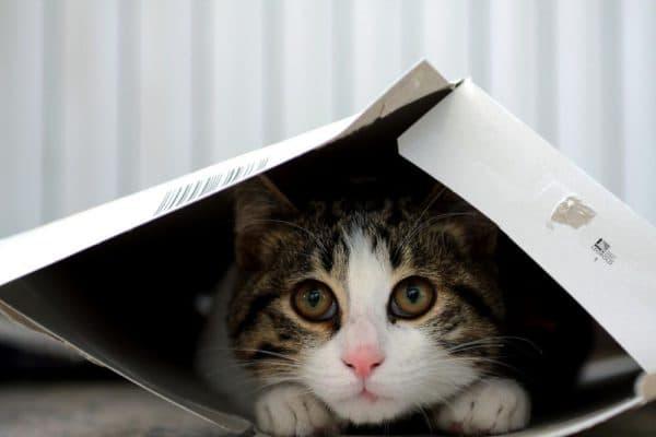 Причины почему кот прячется в темные места