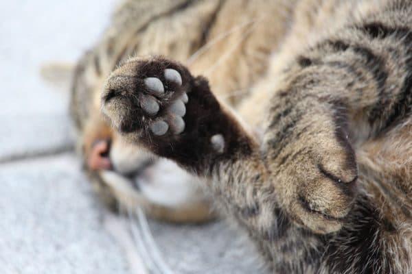 У кошки холодные лапы читайте статью