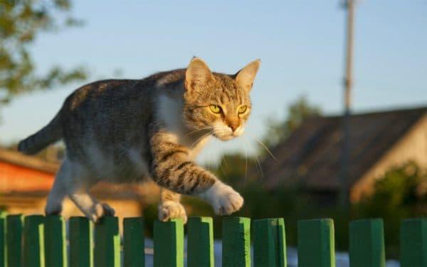 Беспородные кошки, принесенные с улицы